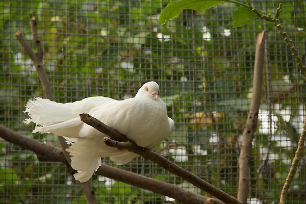 神戸花鳥園に、行ってきました。