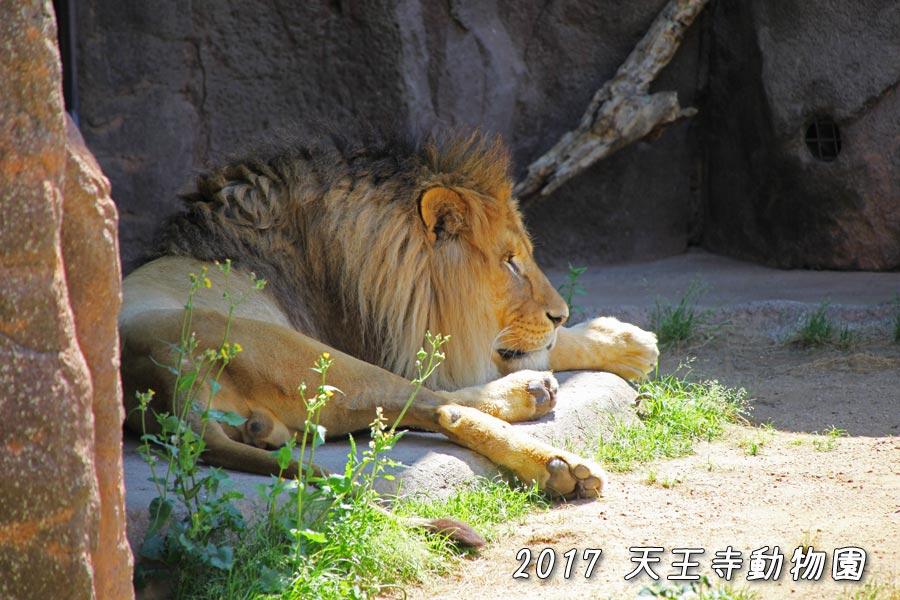 平日の動物園